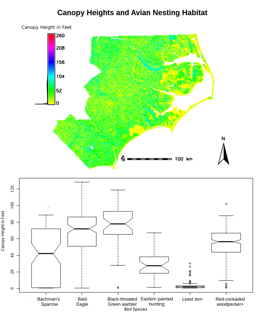Lidar-derived canopy heights for 40 county areas in eastern North Carolina and associated avian nesting habitat data from 25-m buffers. Sparrows nest in a wide range of canopy heights. The Least tern and Black-throated Green warble nest in the low and high canopy extremes, respectively.