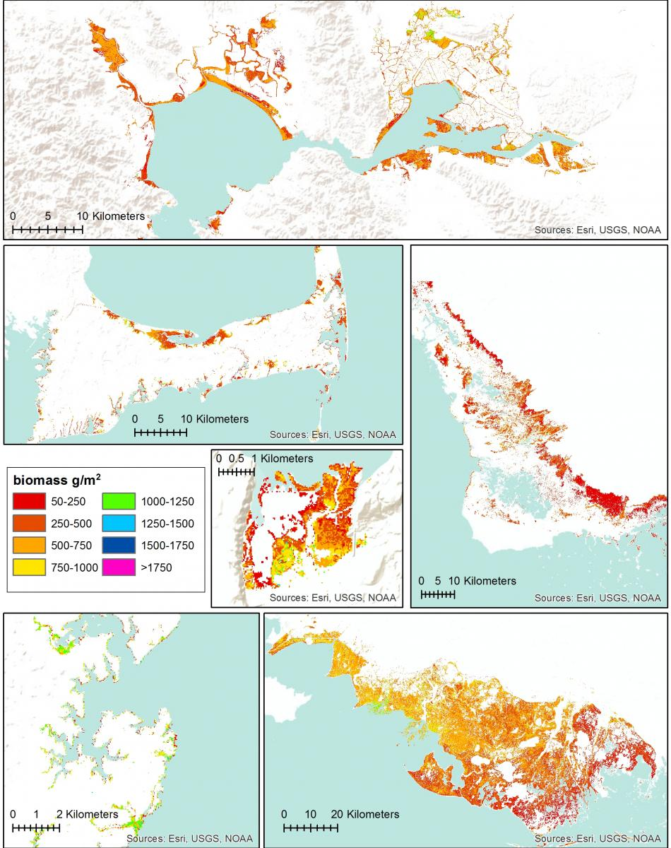 Tidal marsh biomass maps of six CONUS regions based on a single Landsat-based random forest model. Moving from top, left to right: San Francisco Bay, CA; Cape Cod, MA; Everglades, FL; Nisqually National Wildlife Refuge, WA; Chesapeake Bay, MD; and Terrebonne and St. Mary Parishes, LA.