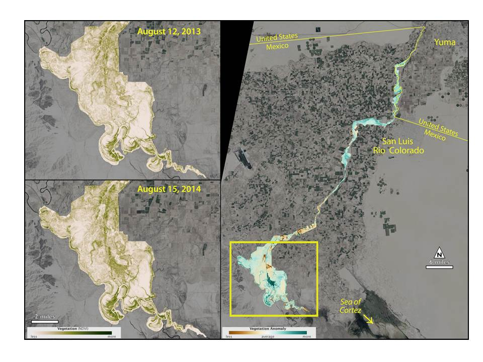 NASA/USGS Satellite Sees Green-up along Colorado River\'s Delta after ...