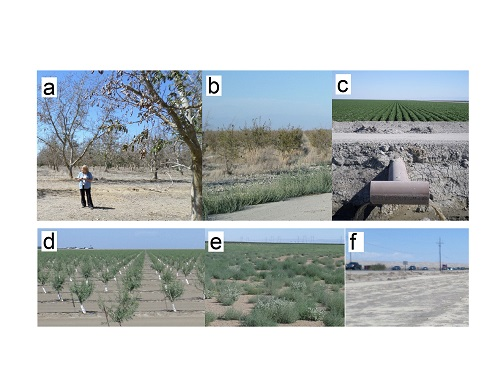 Examples of field sites visited. Top row (L to R): (a) abandoned walnut, (b) abandoned pomegranate, (c) irrigated corn. Bottom row (L to R): (d)  newly planted almond, (e) fallowed field with weeds, (f) fallowed field barren. Photo Credit: Brett Goble, citizen scientist.