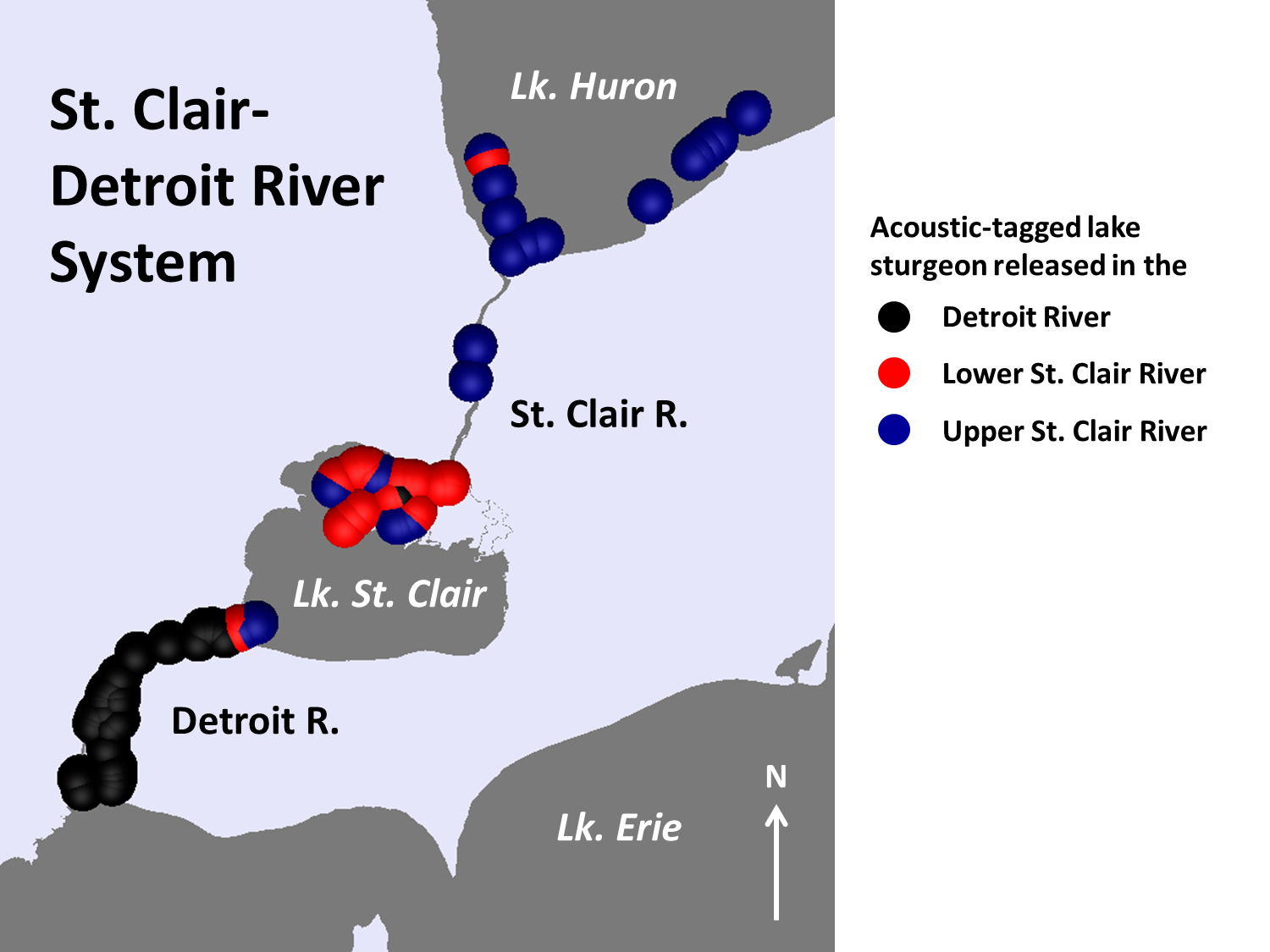 Acoustically tagged lake sturgeon in the St. Clair-Detroit River system, 2014. Color indicates the geographic location of original capture of the specimen before tagging. Dots represent habitat use of tagged fish.