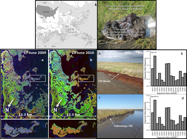 Top: Study area location and oil-contaminated mud. Left: (a) 2009 and (b) 2010 PolSAR processed scenes of the Mississippi River Delta marshes. Changes in color denote changes in marsh condition. Right: (a) shoreline and (c) subcanopy DWH oiling. (b& d) Chemical fingerprinting showed sediment one year after spill contained DWH oil at these sites. The black outlines in b and d represent  the pure DWH oil fingerprint, and the gray fill represents the site oil fingerprint. The closer the gray shading is to the black outline, the more likely the fingerprint is DWH oil.