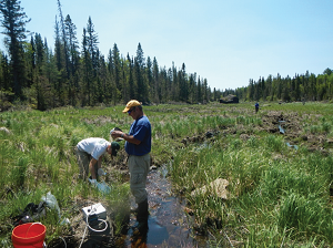 Robert Seal, Nadine Piatek, and Russell Buesing collect water-quality samples and measure stream discharge at sites on Keeley Creek, Minnesota. Water-quality sampling is being done in cooperation with the USFS.