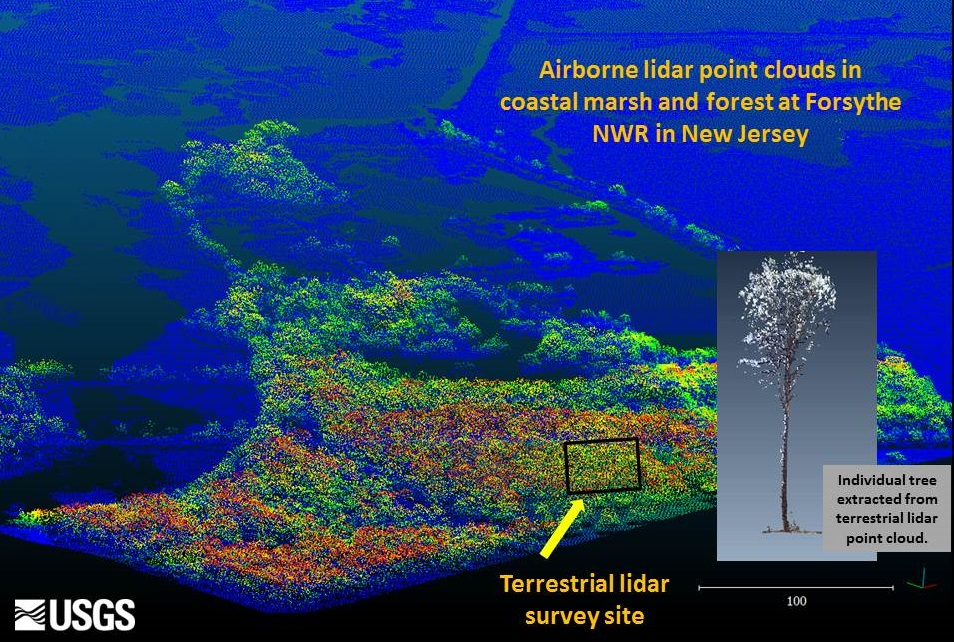 Perspective view of Light Detection and Ranging (LiDAR) results showing an aerial LiDAR image of Edwin Forsythe National Wildlife Refuge, New Jersey (view from the southwest ), and example image of an individual tree extracted from a terrestrial LiDAR scan of the same area (inset).  USGS scientists are using these data to assess forest vegetation damage due to Hurricane Sandy.  (Image credit: Cindy Thatcher).