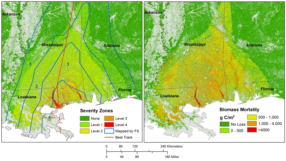 MODIS-derived estimate of above ground forest biomass mortality caused by Hurricane Katrina.