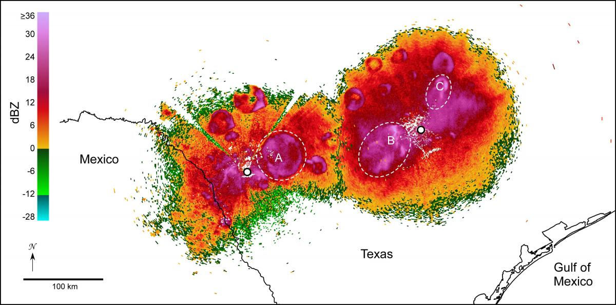 Radar detects more than birds.  While mapping migrating birds in the borderlands, weather radars in central Texas (white dots), documented circular and semi-circular patterns of echo characteristic of Mexican free-tailed bats departing cave roosts (in this case, on the evening of  October 14, 2005). Red/purple colors indicate high bat densities.  Dashed circles highlight noteworthy bat emergences from Frio Cave (A), Bracken Cave (B), and the Congress Avenue Bridge in Austin, Texas (C).  Many other roosts are visible in this image.