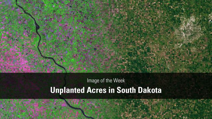 Thumbnail for Image of the Week - South Dakota's Unplanted Acres of 2019
