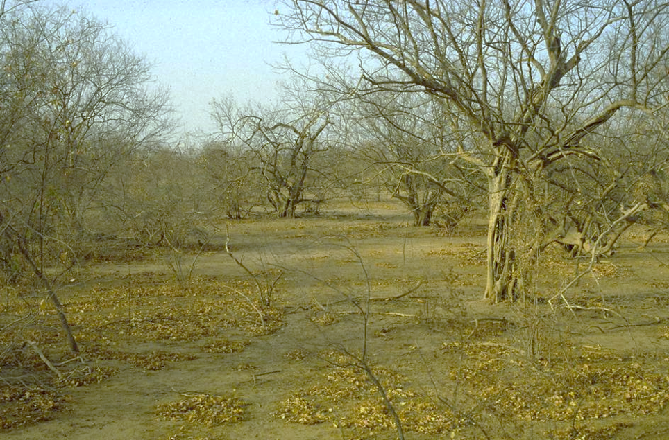 Dry season wooded savanna in north-central Senegal
