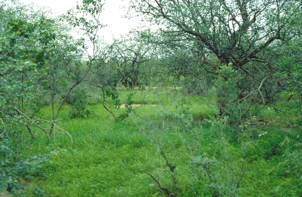 Wet season wooded savanna in north-central Senegal