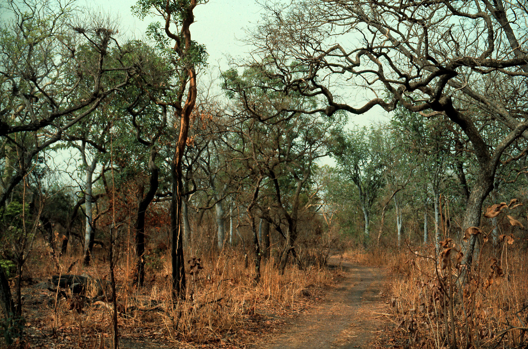 Dry season woodland in south-central Senegal
