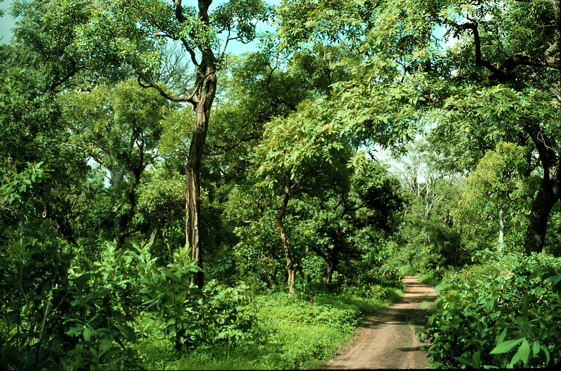 Wet season wooded in south-central Senegal
