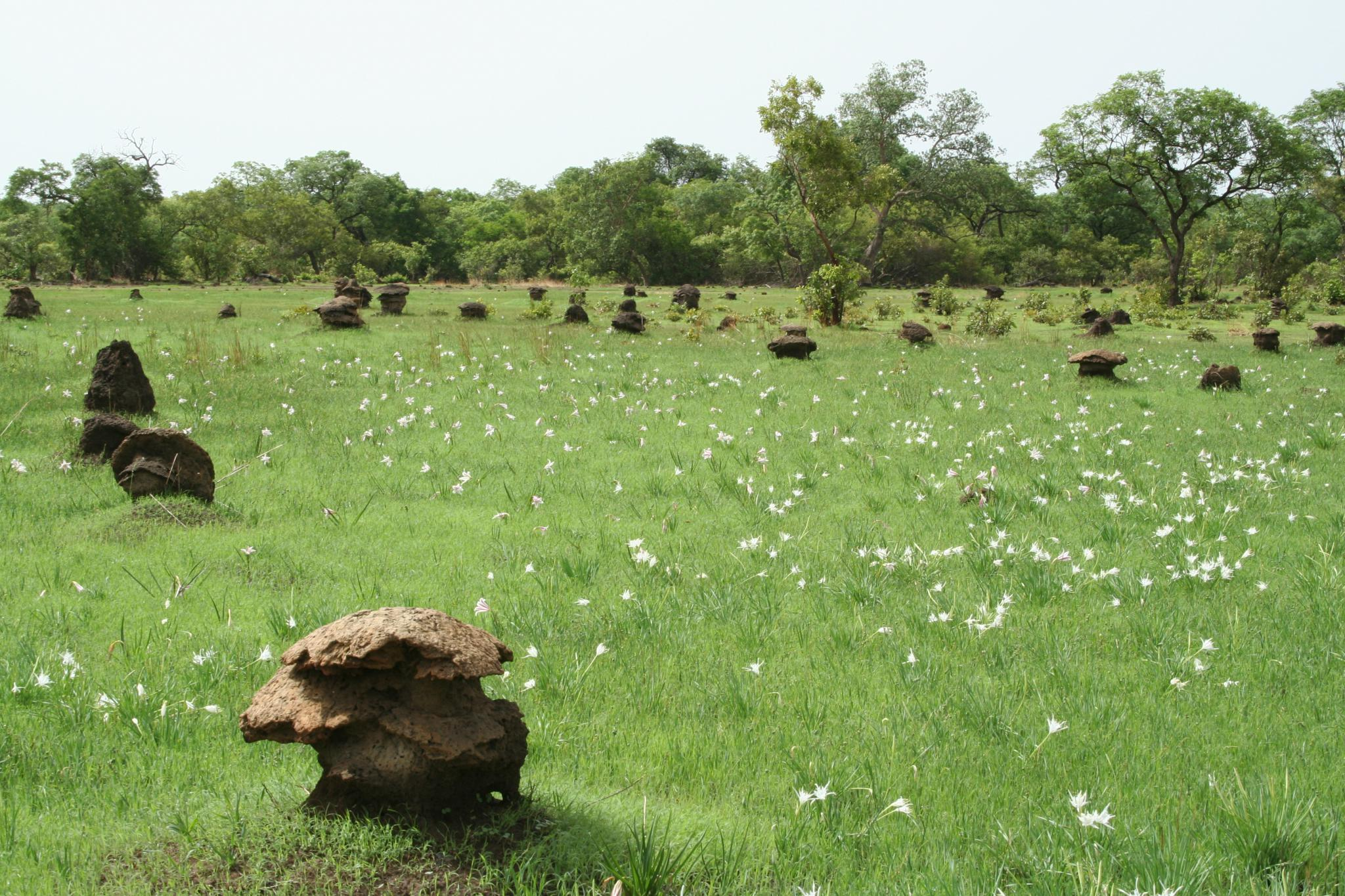 Bowé with characteristic mushroom-shaped termite mounds © Gray Tappan/USGS
