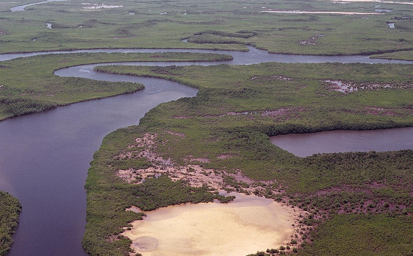Mangroves and estuaries © Gray Tappan/USGS
