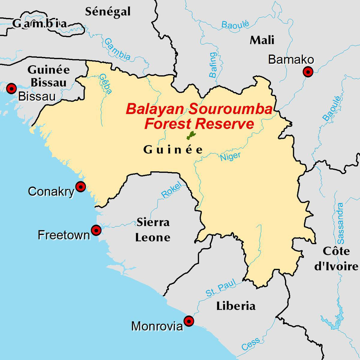 Sustainable forest management in Guinea West Africa